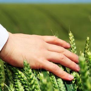 Soddisfatti gli agronomi del Conaf Il congresso mondiale 2015 sarà in Italia