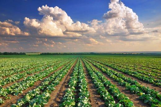 Il collegato rilancia la nostra agricoltura for Rural development arkansas