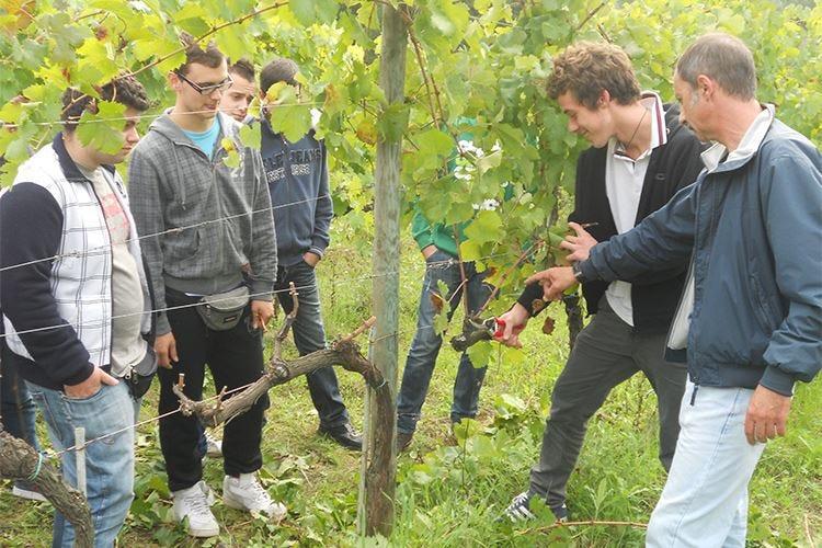 Montalcino punta sulla formazione Nasce l'Istituto professionale agrario