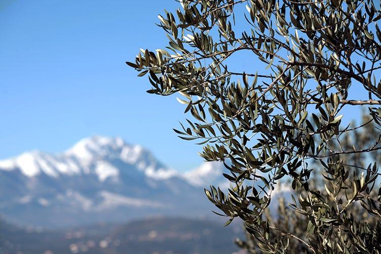 Abruzzo e olio evo Una storia che arriva da lontano
