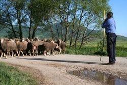 Terremoto, scompaiono i paesi e con loro la pastorizia abruzzese