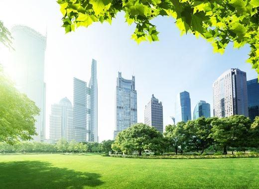 Sisti (Conaf): «Più spazi verdi in città per combattere l'inquinamento»