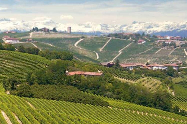 """Alta Langa Docg """"Patto con la terra"""" per tutelare le colline"""