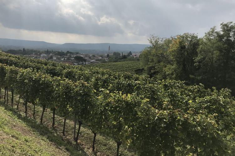 Attems 2019, un'annata di pregio Vini dal forte carattere friulano