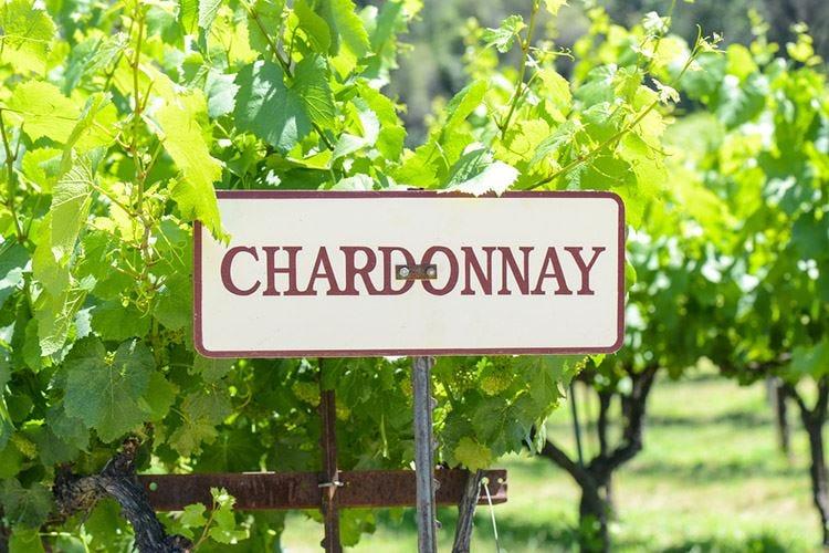 Brut Trentodoc Le peculiarità delle uve Chardonnay