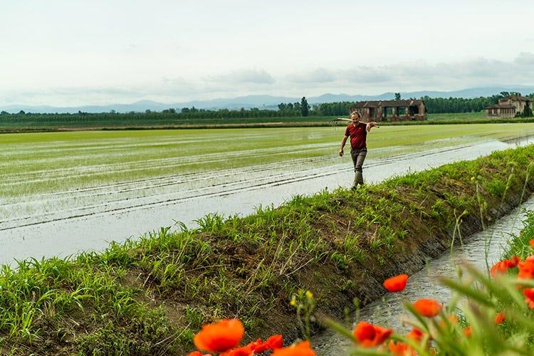 L'azienda agricola seleziona solo le migliori sementi, certificate dall'Ente Risi varietà 100% Carnaroli Isos il riso migliore d'Italia a prova di alta gastronomia