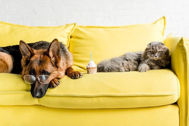 Isolamento a quattro zampe Anche cani e gatti a rischio stress