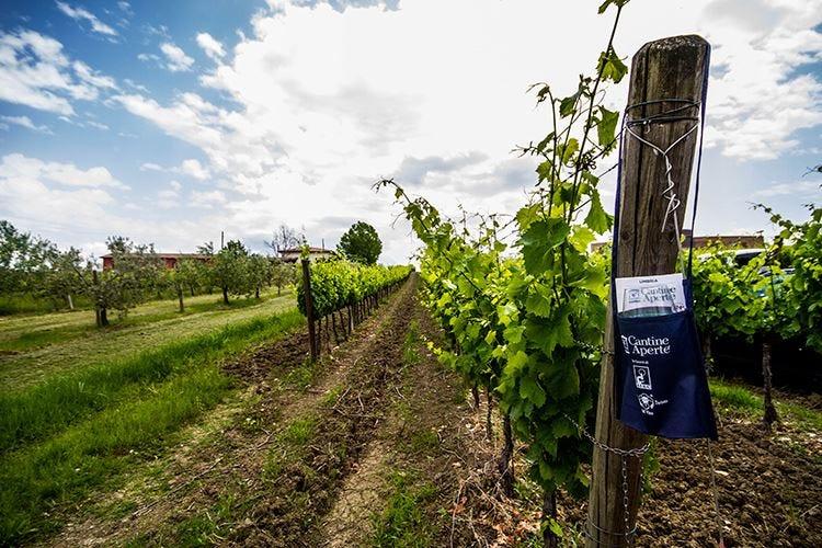 Cantine Aperte Insieme Quest'anno col vino si brinda online