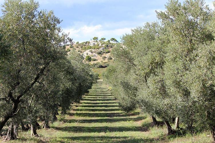 Castelas, l'olio evo di Saint-Rémy nasce dal ritorno alle proprie radici
