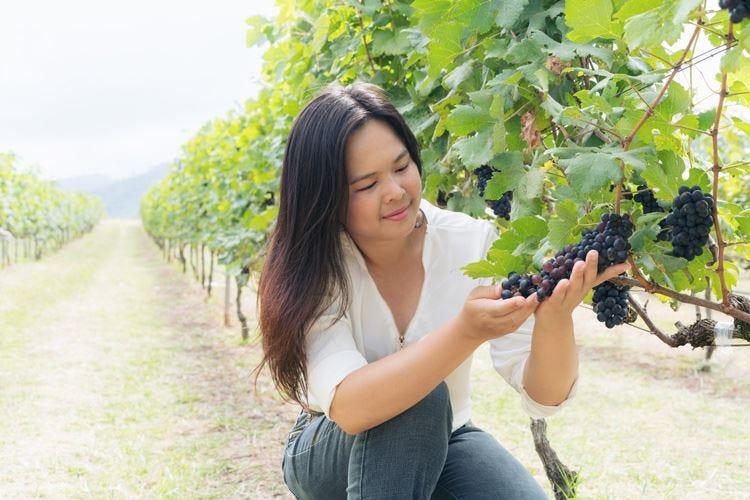 Cina primo produttore d'uva Sul podio Italia (2ª) e Stati Uniti