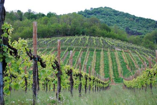 Il consorzio vini asolo montello fa tappa a prowein e for Fiere piemonte oggi