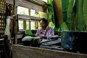 Il cacao, fra natura e biodersità