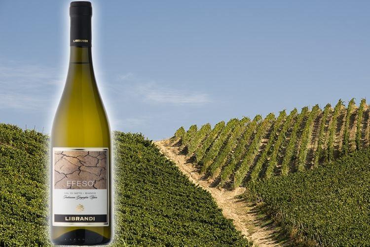 Efeso Librandi, il vino dei profeti