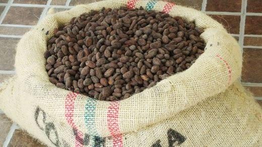 Fino de Aroma, fruttato con note maltate È la nuova frontiera del cioccolato