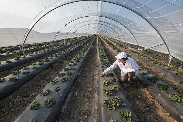 Per la qualità gli italiani sono disposti a spendere di più - Dalla sostenibilità alla trasparenza Le 5 sfide dell'Horeca nel 2021