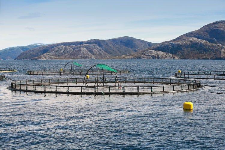 (Il salmone norvegese piace in Italia  24% di export nei primi 5 mesi dell'anno)