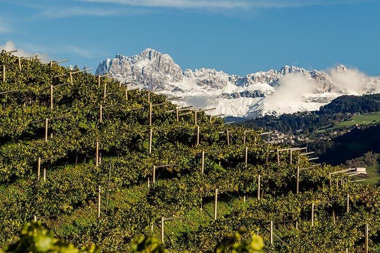 L'Alto Adige vitivinicolo Un piccolo territorio, una grande varietà
