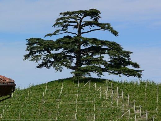 """La """"Bellezza del buono"""" trionfa ad Alba Merito della £$Food Wine Design Week$£"""