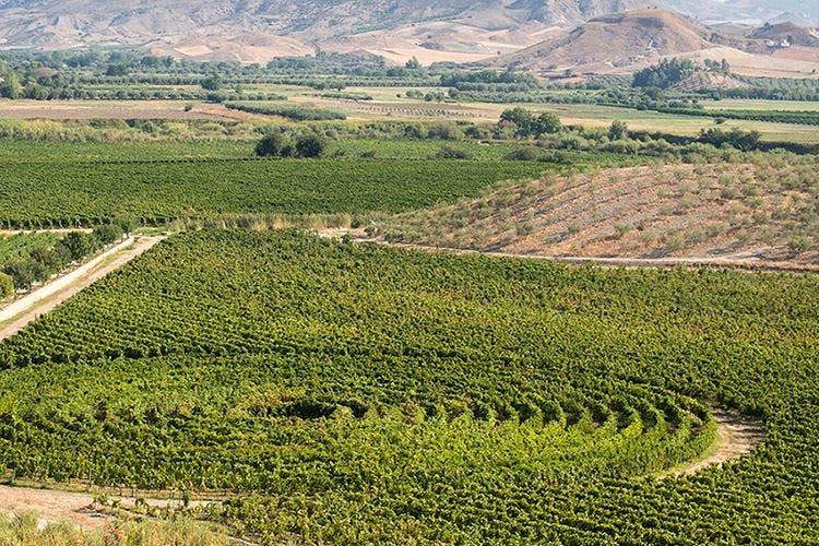 Librandi, ricerca e territorio per valorizzare i vitigni autoctoni