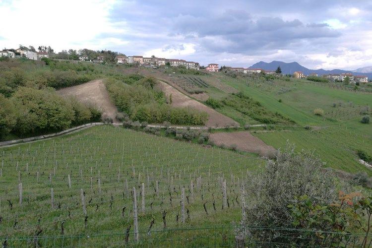 (Lucio Mastroberardino Il concorso che valorizza i vini campani)