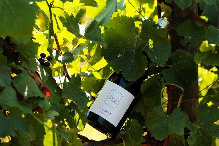 Monsieur Pinot Noir Prime Alture Lechiancole: Ho coronato un sogno