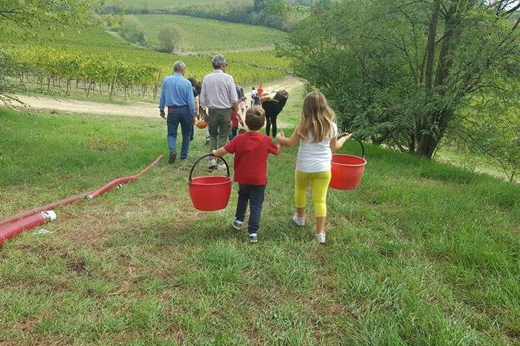 """Movimento turismo del vino Al via """"Cantine Aperte in Vendemmia"""""""