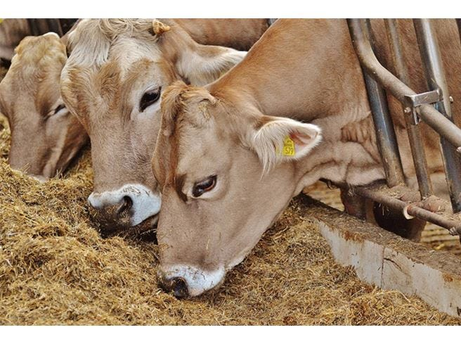 Terremoto met delle stalle inagibili i posti di for Subito it molise attrezzature agricole