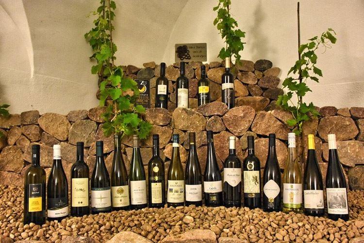 Müller Thurgau, vino di montagna In Valle di Cembra la 31ª edizione