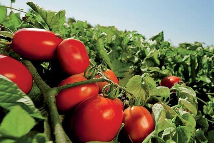 Mutti presenta la linea foodservice Tante le soluzioni di qualità