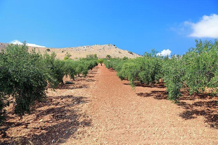 Olio evo nella Sicilia Orientale Gusto tutto da scoprire