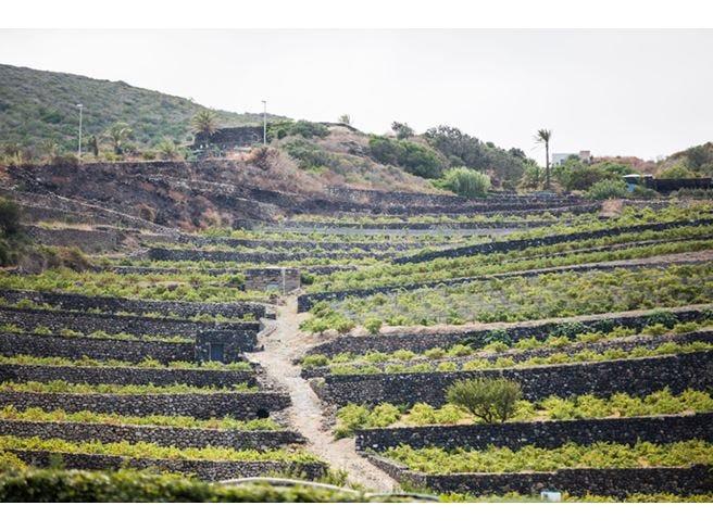Pantelleria Doc Festival Celebrare l'ambiente attraverso il vino