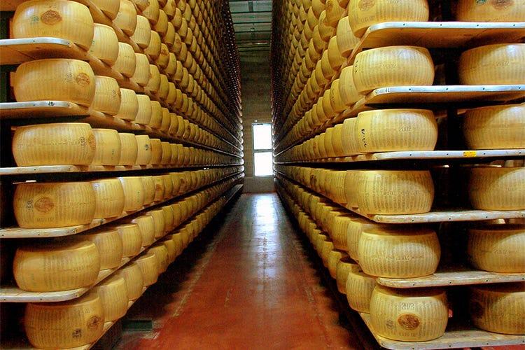 Parmigiano, furti da 10 milioni in 3 anni Oltre 20mila le forme sottratte - Italia a Tavola