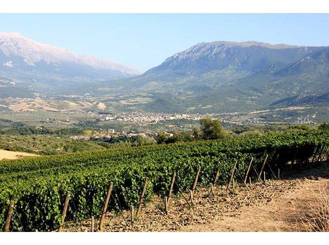 Pasetti, tradizione di famiglia Il vino nasce nel Parco d'Abruzzo