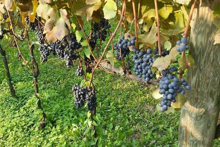 Pinot Nero Tassodine Una verticale di sette annate
