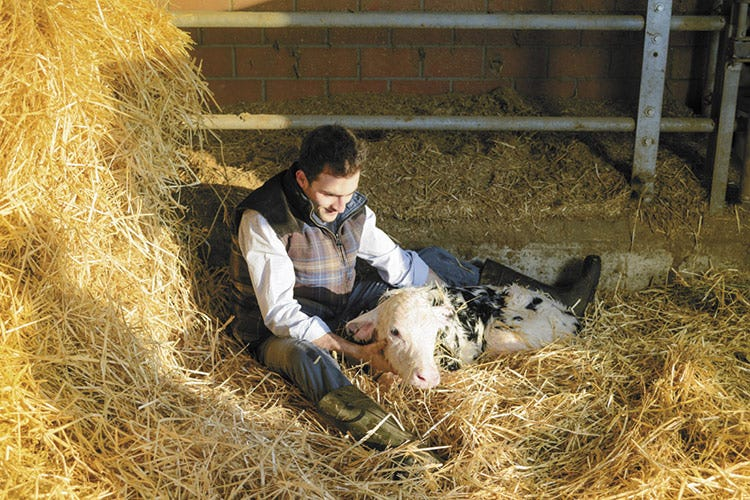 Latte e formaggi più buoni? Lo svela chip genico per i bovini