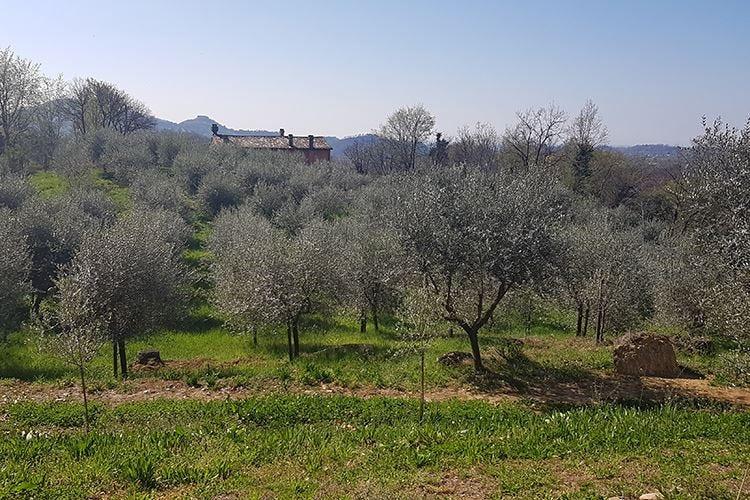 Prosecco Hills Sedici aziende per un territorio
