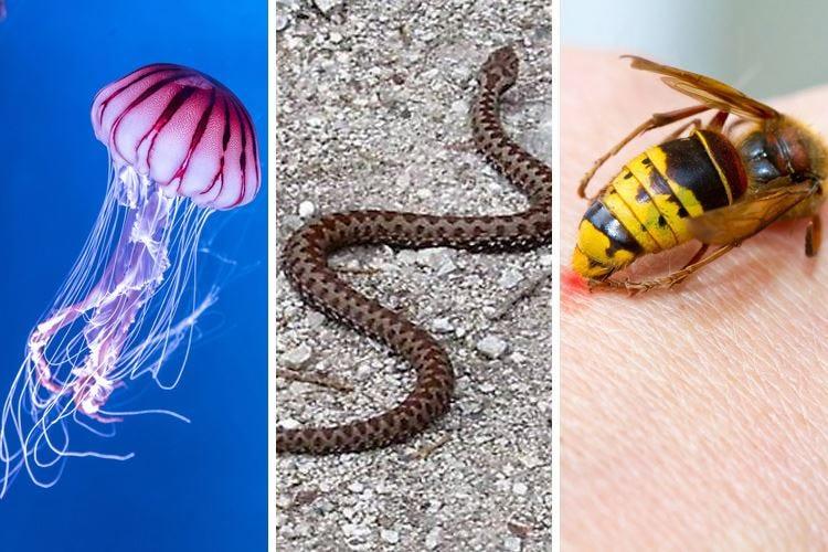 Punture e morsi al mare e in montagna Difendersi da meduse, vipere e insetti