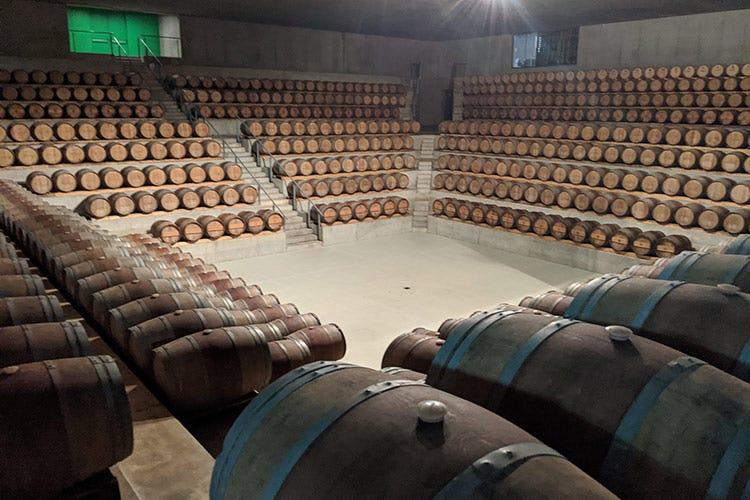 La barricaia - Rocca di Frassinello, tour virtuale fra vini minerali e accoglienza