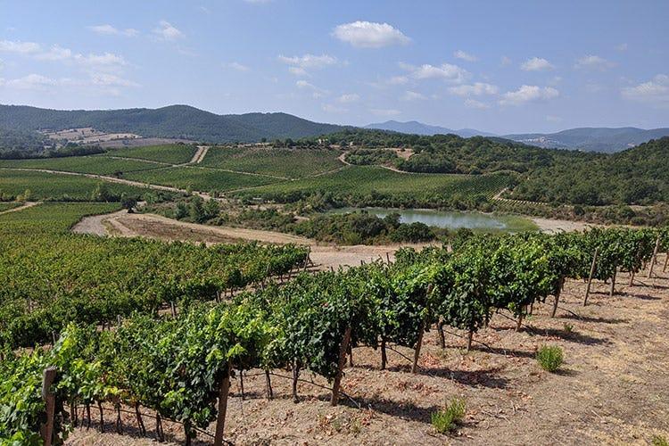 La vista sui vigneti dalla terrazza di Rocca di Frassinello - Rocca di Frassinello, tour virtuale fra vini minerali e accoglienza