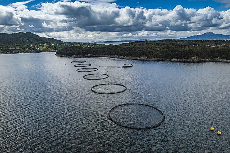 Mangimi nutrienti e sostenibili per il Salmone Norvegese