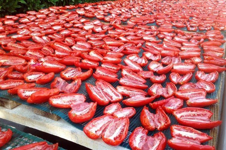 Danicoop fa del San Marzano Dop l'oro rosso del Made in Italy