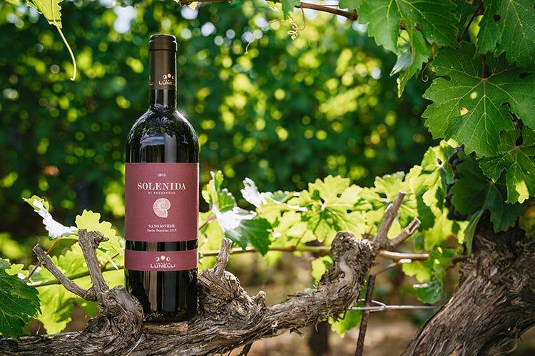 Vino&Beverage - cover