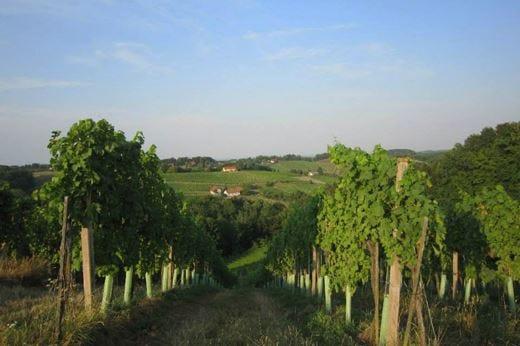 La Strada del vino della Stiria festeggia i 60 anni dall'inaugurazione