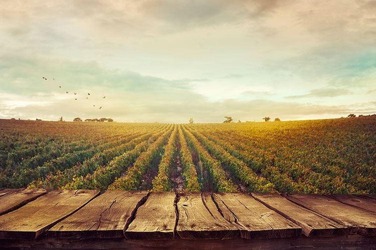 Sustainable Winegrowing Summit La prima edizione del convegno a Verona