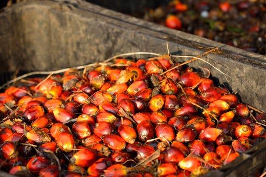 Olio di palma, Aidepi si sbilancia Le aziende: «Faremo la nostra parte» - Italia a Tavola