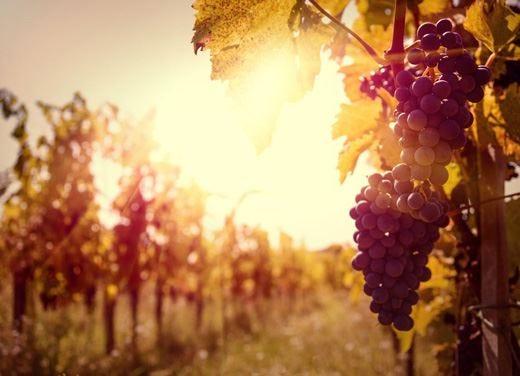 Storia del vino tra i banchi di scuola In Senato arriva un disegno di legge