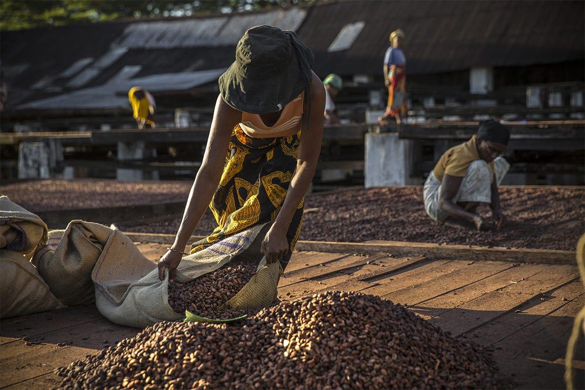 Valrhona dal 1990 porta avanti una collaborazione con la piantagione Millot Millot 74%, il cioccolato biologico Valrhona per una filiera equa