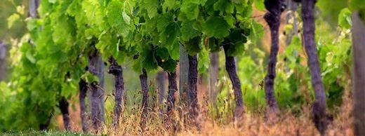 Valtènesi, un patto di territorio per unire tutti i produttori