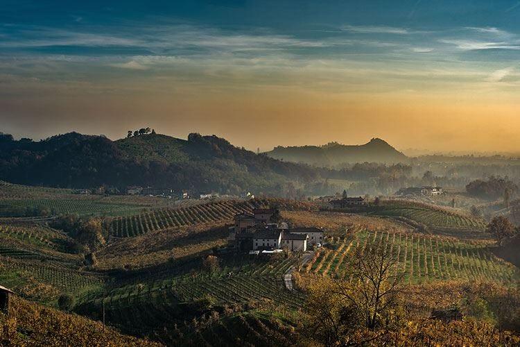 Il Veneto trascina l'Italia del vino Undici milioni di ettolitri nel 2019