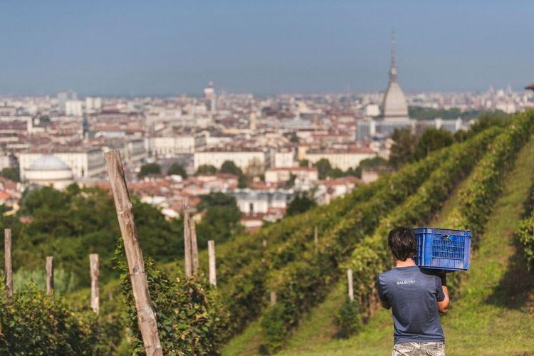 Vigne urbane Patrimonio Unesco Torino chiama Venezia e Parigi